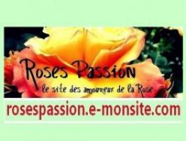 Roses Passion