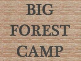 Big Forest Camp