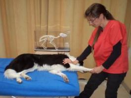 Réhabilitation canine -Communication animale- Fleurs de Bach