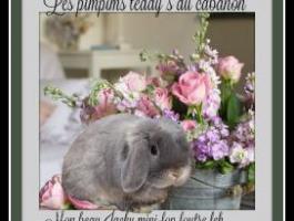Les Pimpims Teddy's du cabanon