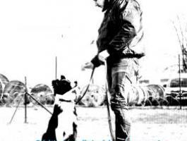 Cédric legallais éducateur canin