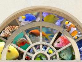 Méthode pour démarrer et maintenir un aquarium récifal