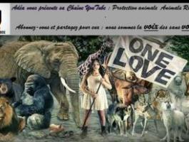 La cause animale, protection et droits des animaux